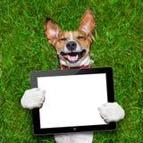 拿着片剂的狗 库存图片