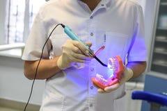 拿着牙齿石膏模型的手套的牙医` s手 库存照片