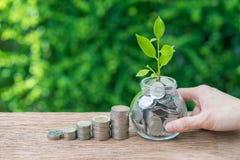 拿着瓶子以充分的手与成长新芽植物的硬币  免版税库存照片