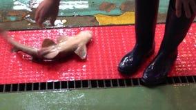 拿着用手一个小鲨鱼的亚裔妇女的慢动作 海鲜市场 股票视频