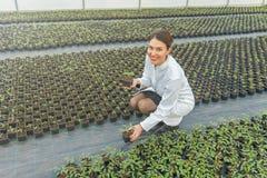 拿着盆的植物的妇女在温室托儿所 幼木 库存照片