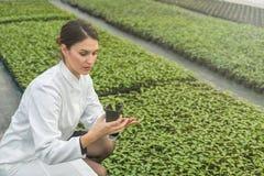 拿着盆的植物的妇女在温室托儿所 幼木 免版税图库摄影