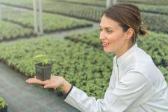 拿着盆的植物的妇女在温室托儿所 幼木 免版税库存图片