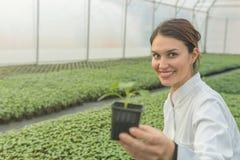 拿着盆的植物的妇女在温室托儿所 幼木 免版税库存照片