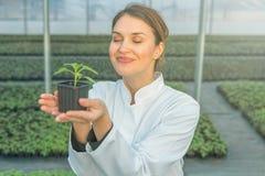 拿着盆的植物的妇女在温室托儿所 幼木 库存图片