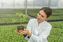 拿着盆的植物的妇女在温室托儿所 幼木 图库摄影