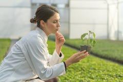 拿着盆的植物的妇女在温室托儿所 幼木Gree 免版税图库摄影