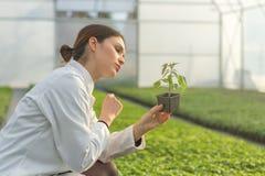 拿着盆的植物的妇女在温室托儿所 幼木Gree 免版税库存照片