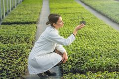 拿着盆的植物的妇女在温室托儿所 幼木Gree 免版税库存图片