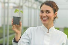 拿着盆的植物的妇女在温室托儿所 幼木Gree 库存图片