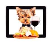 拿着盘子用在片剂的食物的狗 免版税库存图片