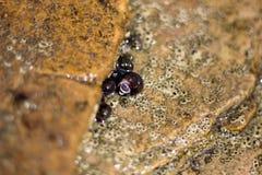 拿着石头的蜗牛 免版税库存照片