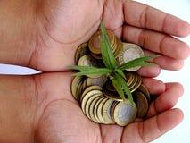 拿着硬币和小植物的儿童手 库存照片