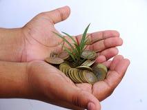 拿着硬币和小植物的儿童手 图库摄影