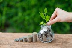 拿着硬币的手放入有成长新芽植物的瓶子作为f 库存图片