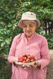 拿着碗草莓的一个老妇人的画象 库存照片