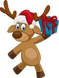 拿着礼物的愉快的动画片鹿 免版税库存图片