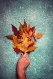 拿着秋天五颜六色的叶子的花束女性手 库存图片