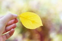 拿着秋天叶子的妇女反对美好的bokeh背景 库存图片