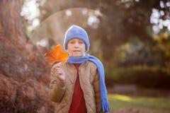 拿着秋天叶子的逗人喜爱的男孩画象 图库摄影