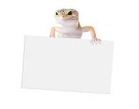 拿着空白的标志的壁虎 免版税库存照片