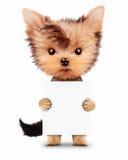 拿着空的横幅的滑稽的狗,隔绝在白色 库存照片