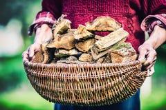 拿着篮子的领抚恤金者农夫有很多木柴 供以人员木在篮子外面点燃壁炉的资深对负 免版税库存图片