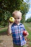 拿着红色和绿色苹果的男孩 库存照片