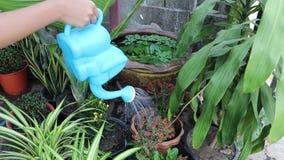 拿着绿色喷壶的年轻手浇灌花