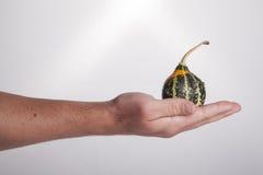 拿着绿色金瓜的现有量 免版税库存图片