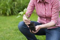 拿着罐的资深妇女特写镜头一棵植物 库存照片