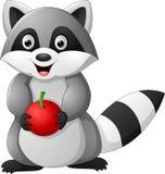 拿着苹果的动画片浣熊 免版税库存图片