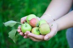 拿着苹果的女性手。 免版税库存照片