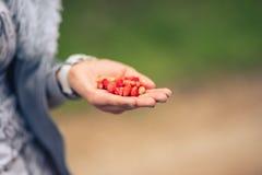 拿着草莓的女性手反对被弄脏的绿色背景 免版税库存照片