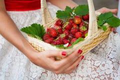 拿着草莓的篮子女性手 库存照片