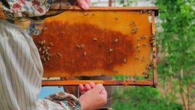 拿着蜂窝的框架蜂农 股票录像