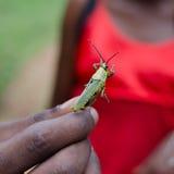 拿着蝗虫的人的手 免版税图库摄影