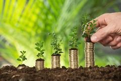 拿着被堆积的硬币的人手小植物 免版税库存照片