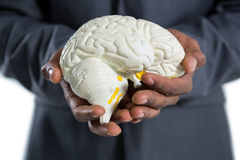 拿着解剖学脑子的商人 库存图片