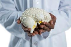 拿着解剖学脑子的医生 免版税库存照片