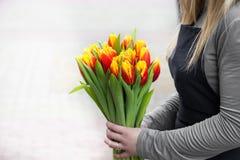 拿着郁金香的年轻阿曼 礼品券模板、海报或者贺卡-拿着郁金香的花束妇女 免版税库存图片