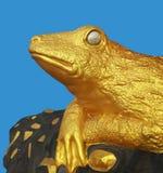 拿着金牌的金黄青蛙 免版税库存图片