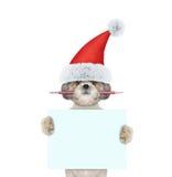 拿着铅笔和空白的逗人喜爱的圣诞老人狗 免版税图库摄影