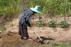 拿着锹的妇女农夫在领域,泰国 免版税图库摄影