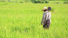 拿着锹的老农夫在米领域 免版税库存照片