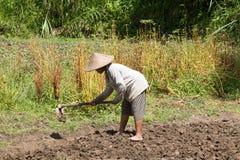 拿着锹的老妇人农夫在领域 巴厘岛印度尼西亚 免版税库存图片