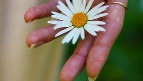拿着雏菊的绽放在棕榈特写镜头的妇女 股票视频
