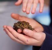 拿着青蛙的孩子 免版税库存照片