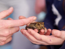 拿着青蛙的孩子 库存照片