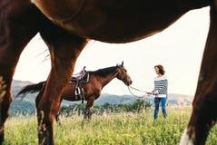 拿着马的一名资深妇女由他的在牧场地的主角 免版税库存照片